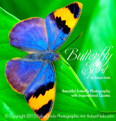 Butterfly Spirit Beautiful Butterfly Photography And Inspirational