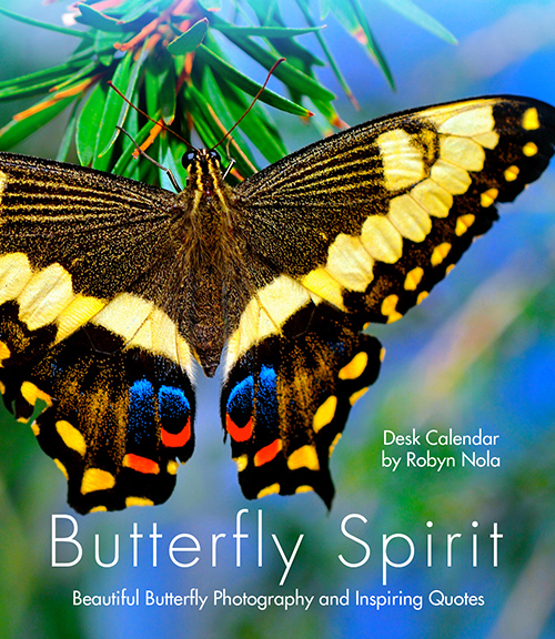 "New Orleans Festival Calendar 2020 Butterfly Spirit"" 2020 Butterfly Desk Calendar by Robyn Nola"