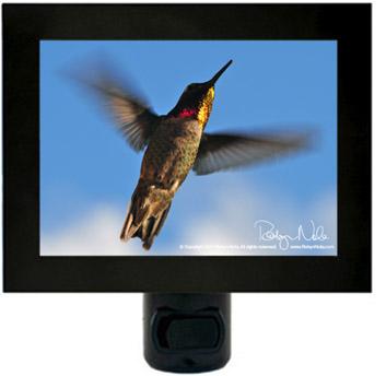 Hummingbird Night Lights