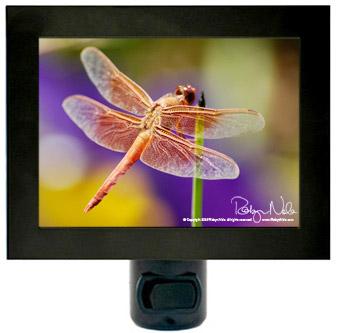 Dragonfly Night Lights